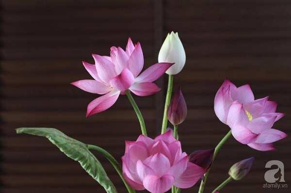 anh dep cay hoa sen