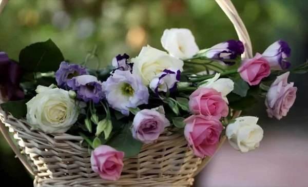 hinh anh hoa lan tuong