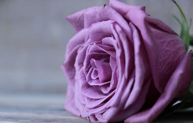 hoa sinh nhat hong tim